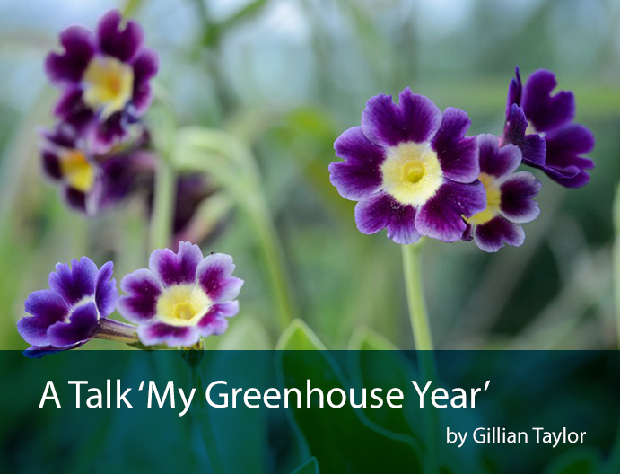 my greenhouse year