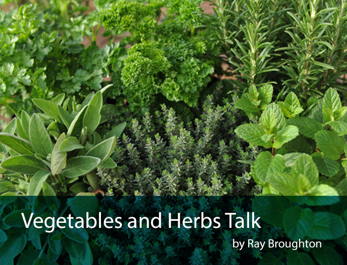Veg and herbs talk